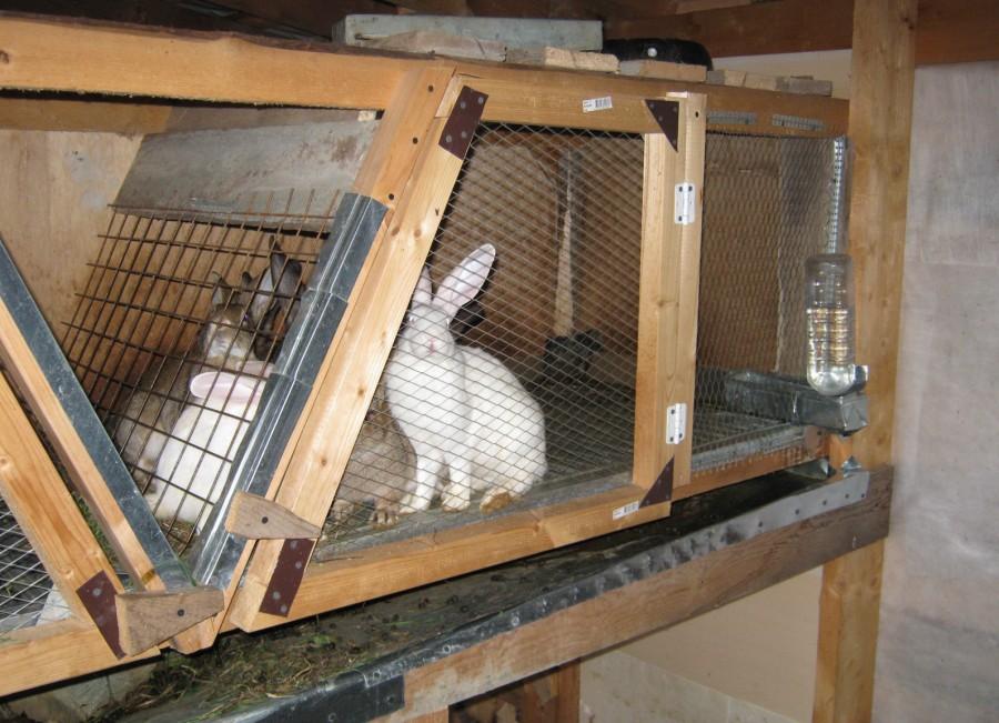 Клетки для кроликов своими руками для молодняка