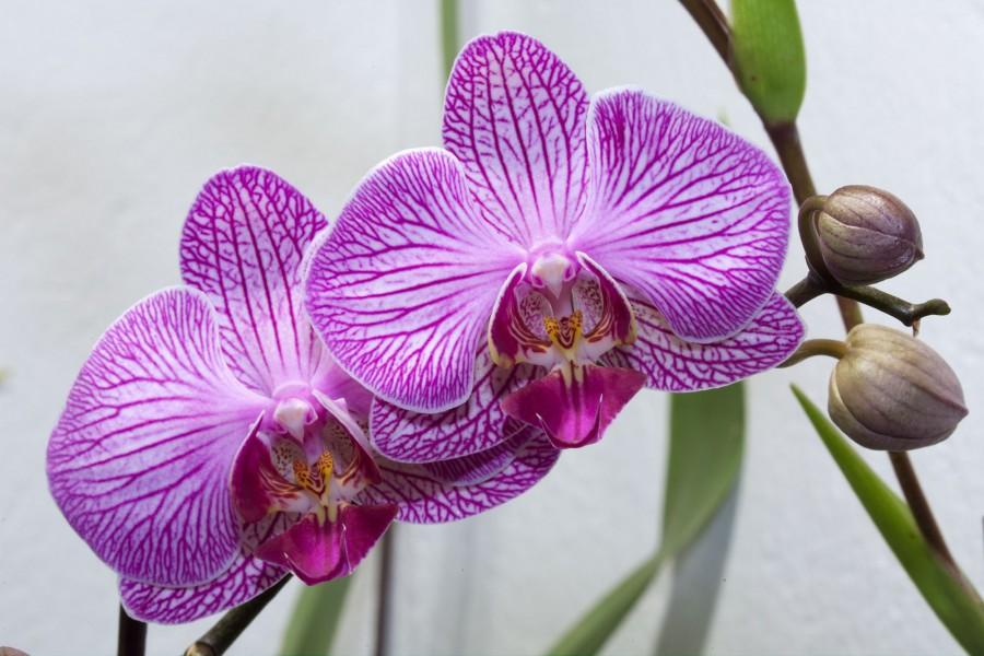 Цветы орхидеи фото и картинки