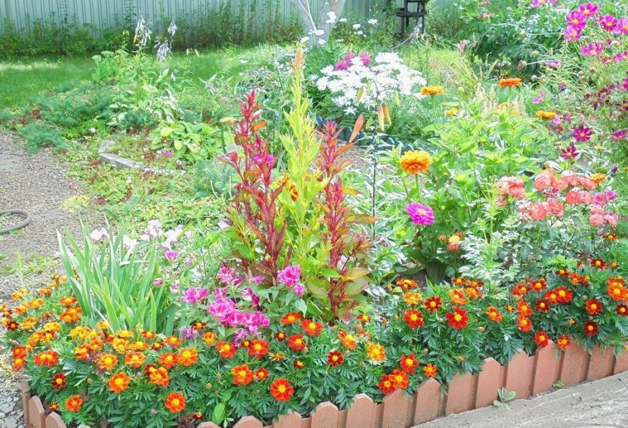 Какие сажать цветы на даче 376