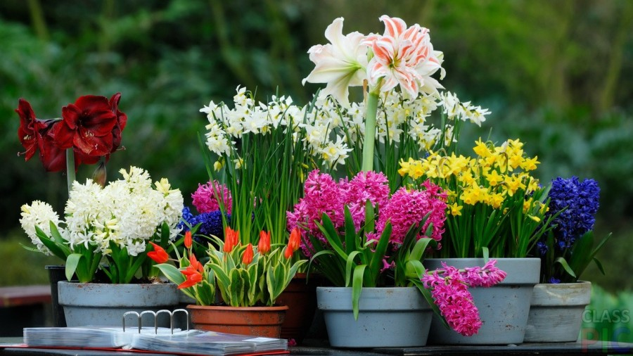 Какие большие цветы можно выращивать дома в горшках?