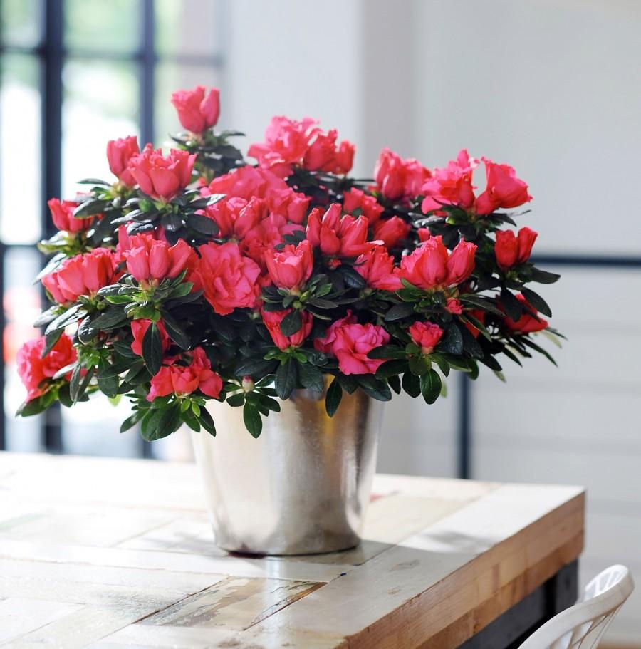 Цветы которые можно выращивать в маленьких горшках