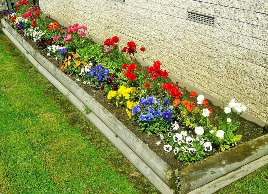 Клумбы из неприхотливых цветов